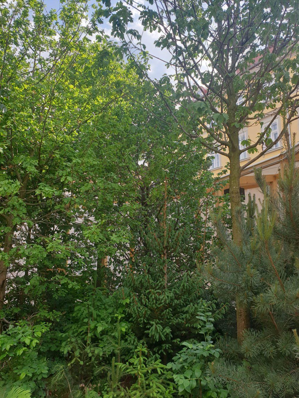 Klima-Pavillon am Grazer Freiheitsplatz