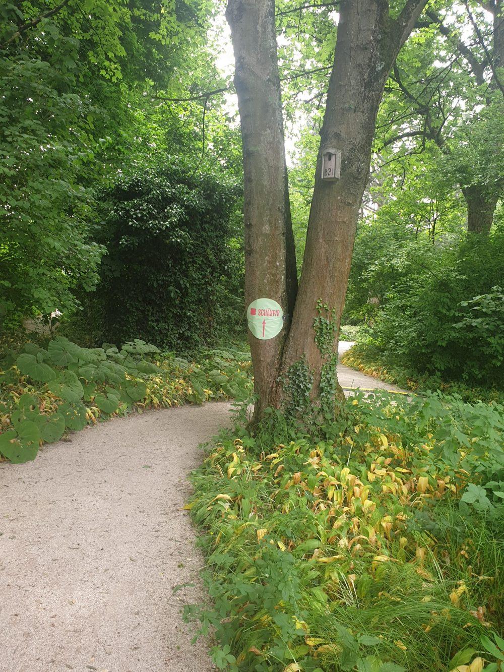 Hinweisschild zur Schäxpir-Veransaltung auf einem Baum