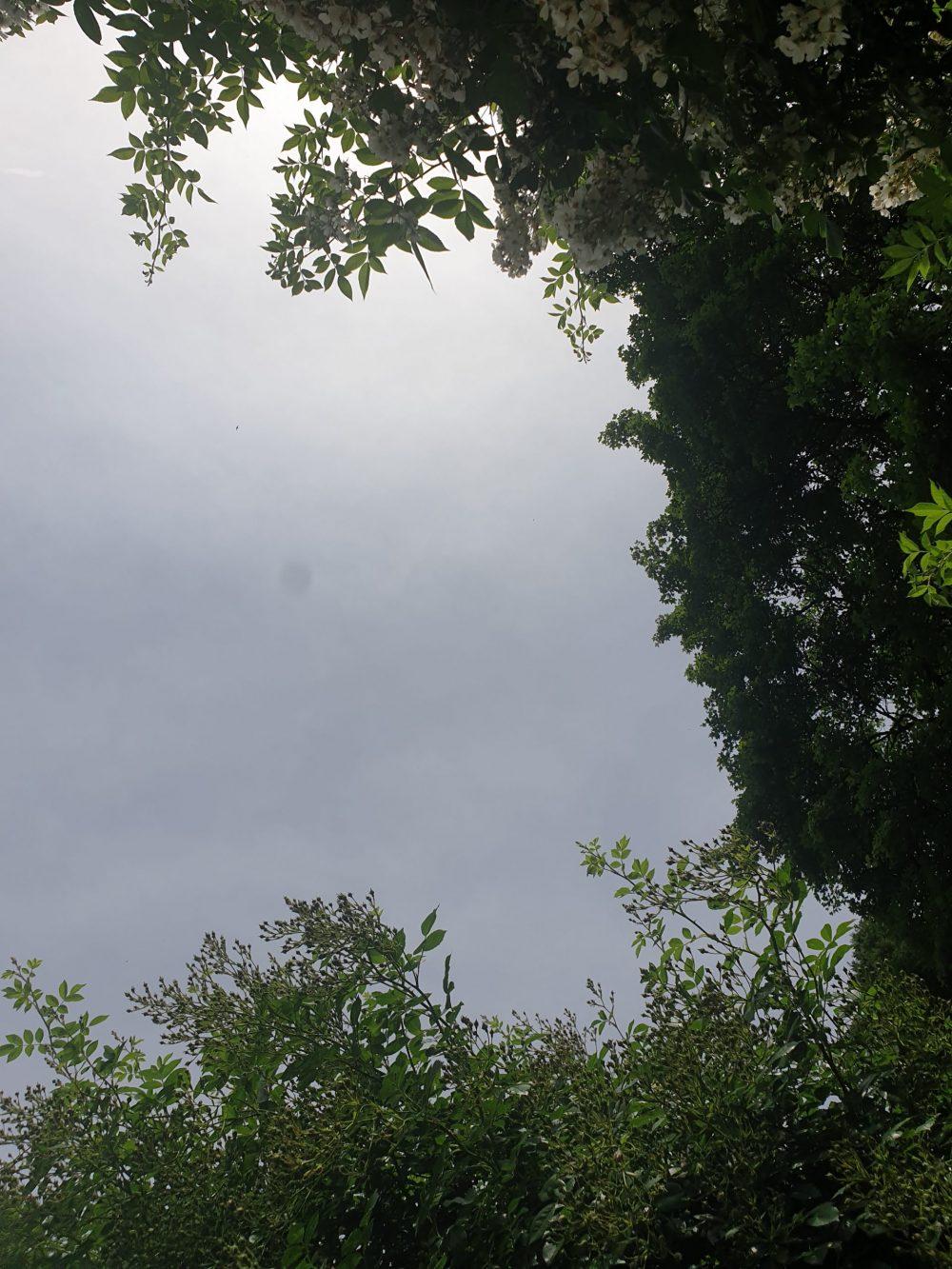 Blick in den Himmel - von Bäumen umgeben