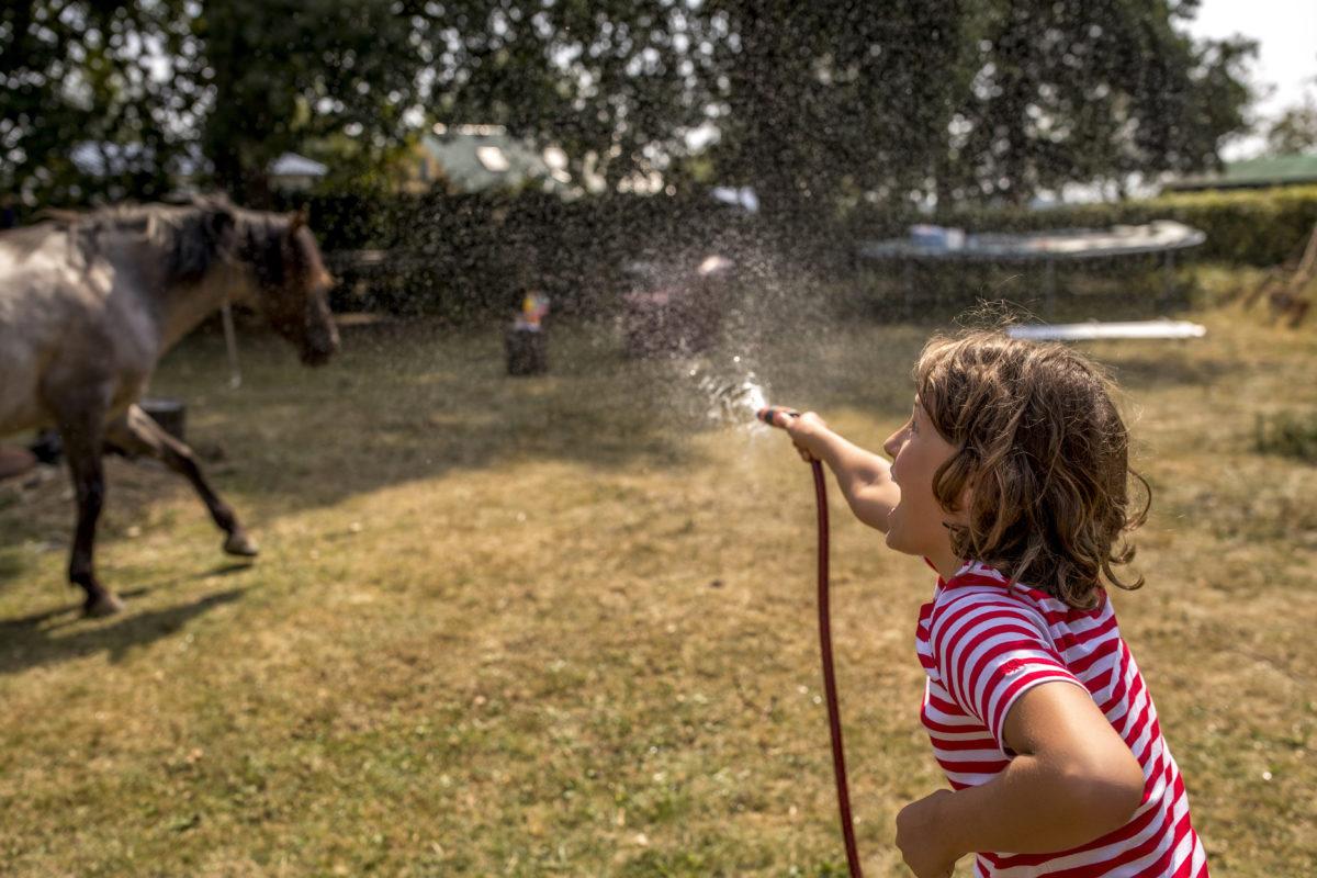Paul versucht das Pferd mit einem Wasserschlauch abzuspritzen: Foto: Tomas Rodriguez