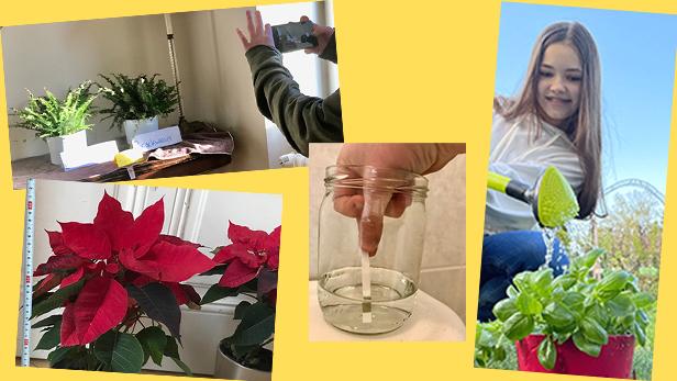 Bildmontage aus Fotos von Pflanzen und einer Jugendlichen, die eine solche gießt sowie einer Wassermessung