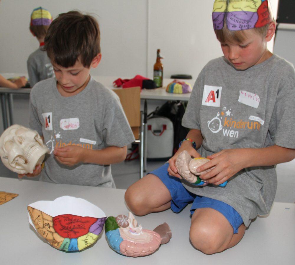 Kinder mit Teilen des Kunststoff-Gehirns