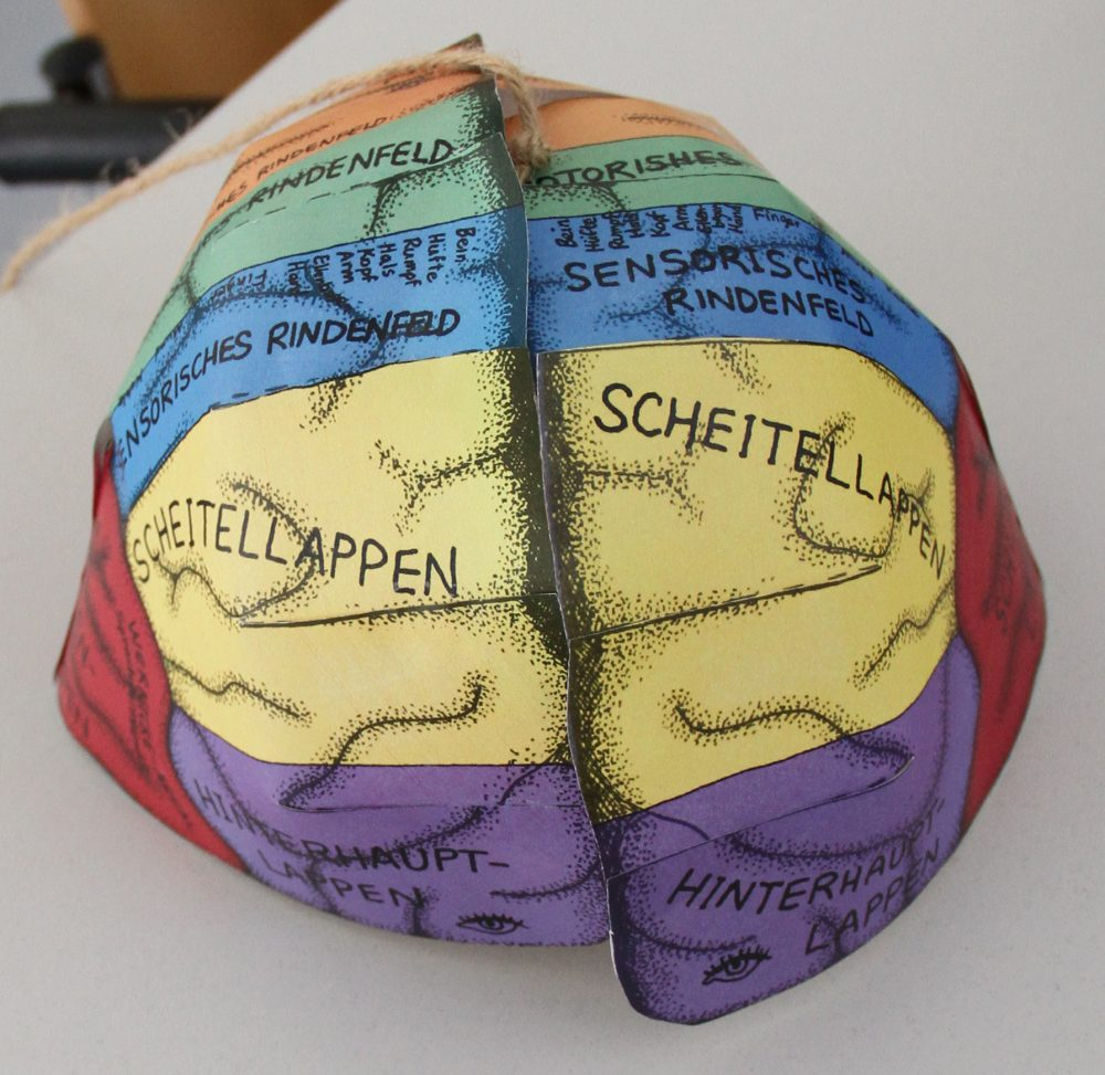 Das fertig zusammengeklebte Papier-Gehirn
